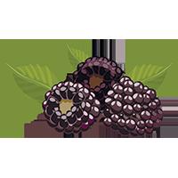 97 tonnes of blackberries per year