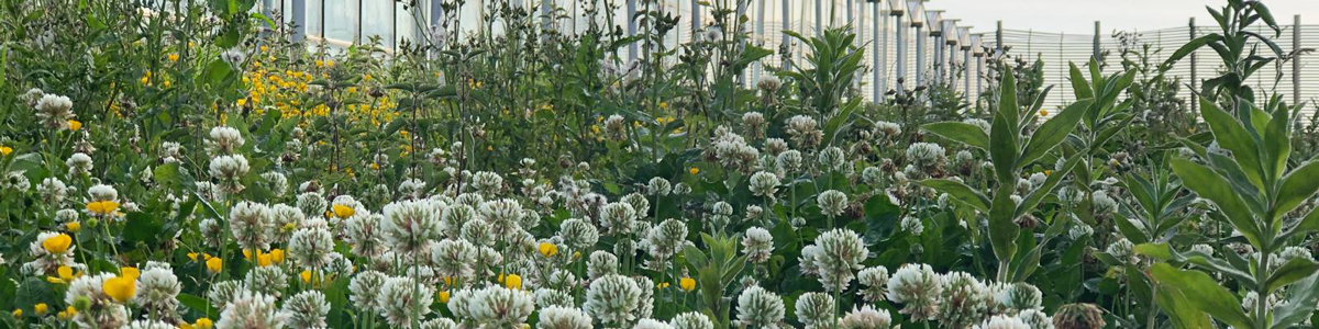 Wildflower ecosystem at Flavourfresh