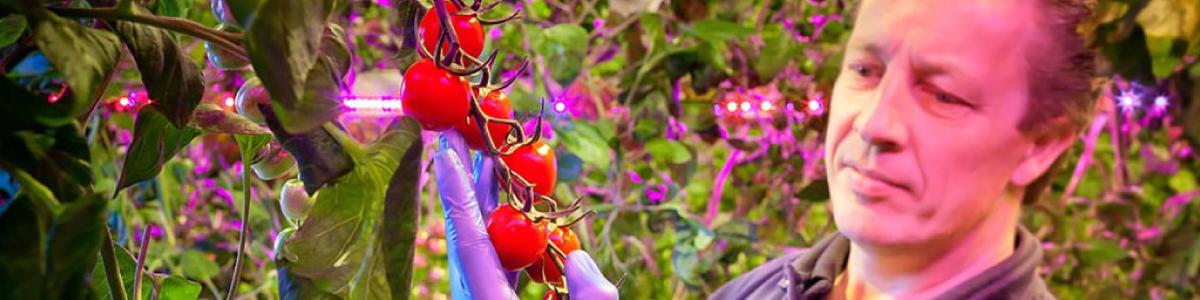 Nic van Roosmalen Tomato Expert at Flavourfresh