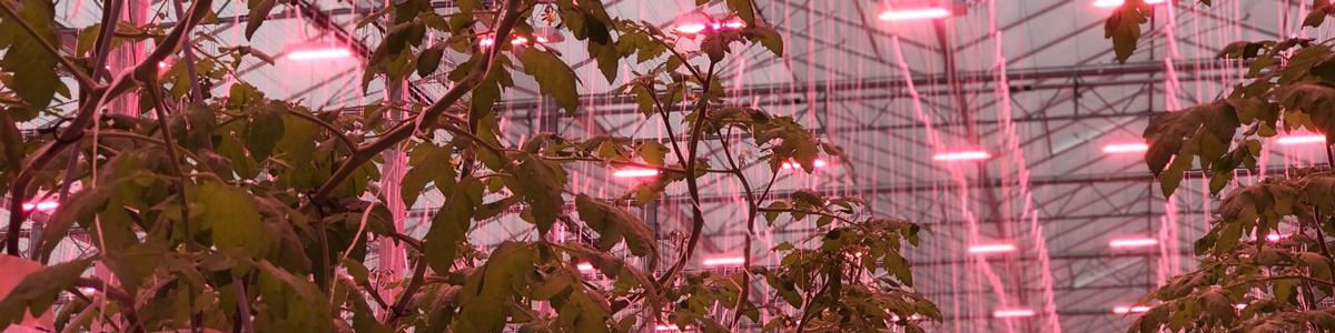 Genesis LED Lighting Flavourfresh